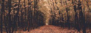 Herbstanfang – Laub, Nässe & Unfallgefahr